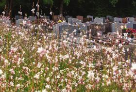 Fleurs abondantes avec un cimetière en arrière-plan.