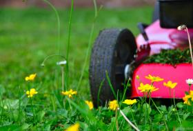 Une tondeuse sur une pelouse avec quelques fleurs.
