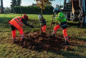 Des agents municipaux plantent un arbre.