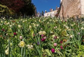 Massif de plantes fleuries sur les marches de l'escalier Denis-Papin, avec sa statue en arrière-plan et un ciel dégagé de printemps.