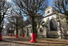 Arbres protégés en vue des travaux sur la place Saint-Saturnin.