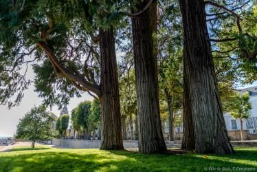 Immenses arbres remarquables faisant de l'ombre sur la pelouse des jardins de l'évêché.