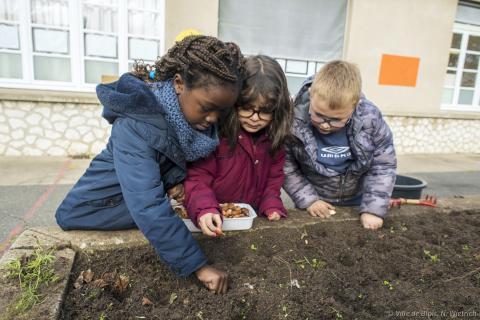 Trois camarades plantent des bulbes ensemble.