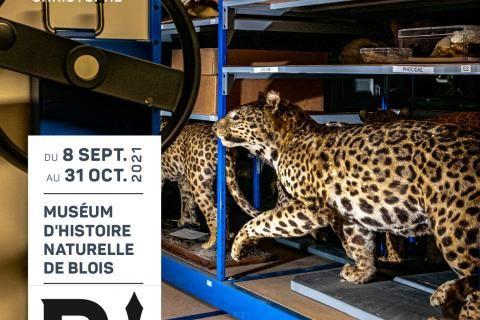 Affiche de l'évènement : des spécimens de guépards sont conservés dans les réserves du Muséum.