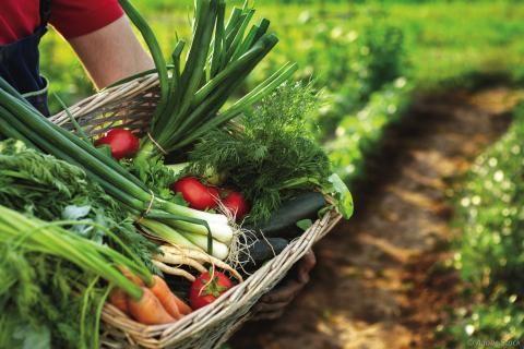 Panier de légumes dans un champ.