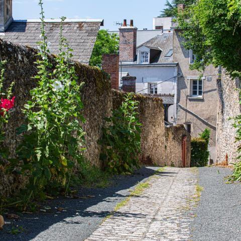 Rue fleurie et ensoleillée, avec un chat dans l'ombre.