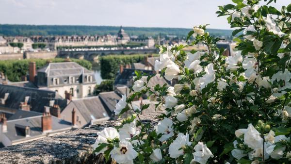 La roseraie des jardins de l'évêché surplombe les quais et offre un point de vue sur le sud de Blois.