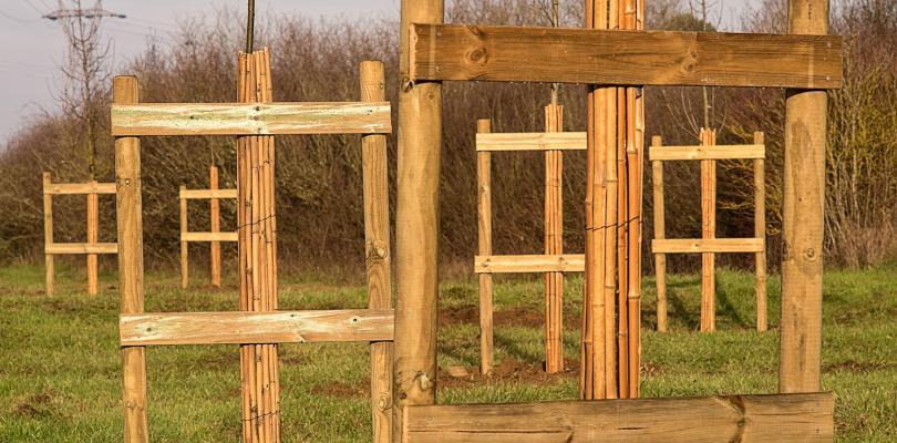 Arbres plantés tout récemment, guidés par des tuteurs en bois.