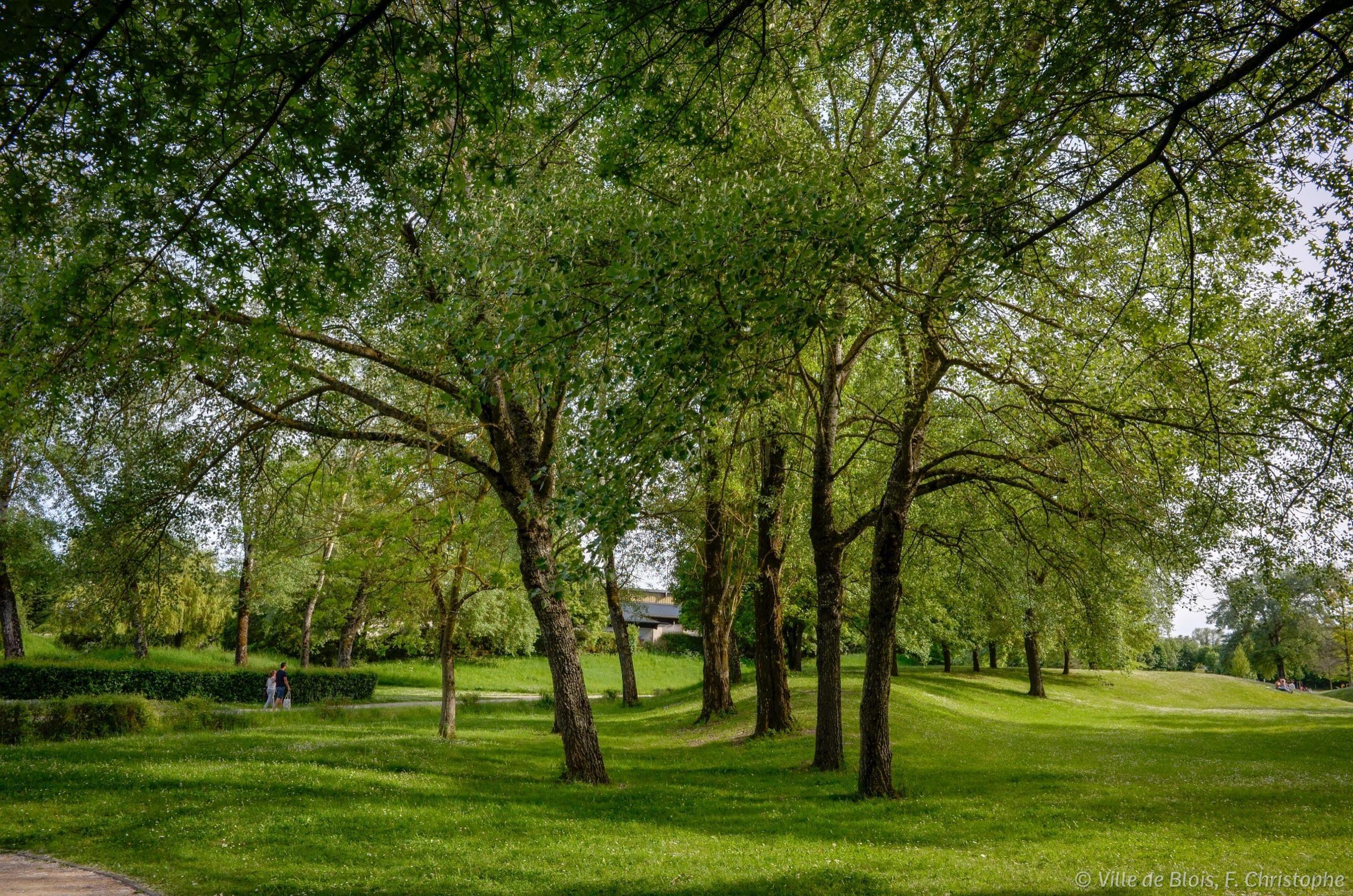 Parc des Mées : de grands arbres font de l'ombre sur l'herbe.