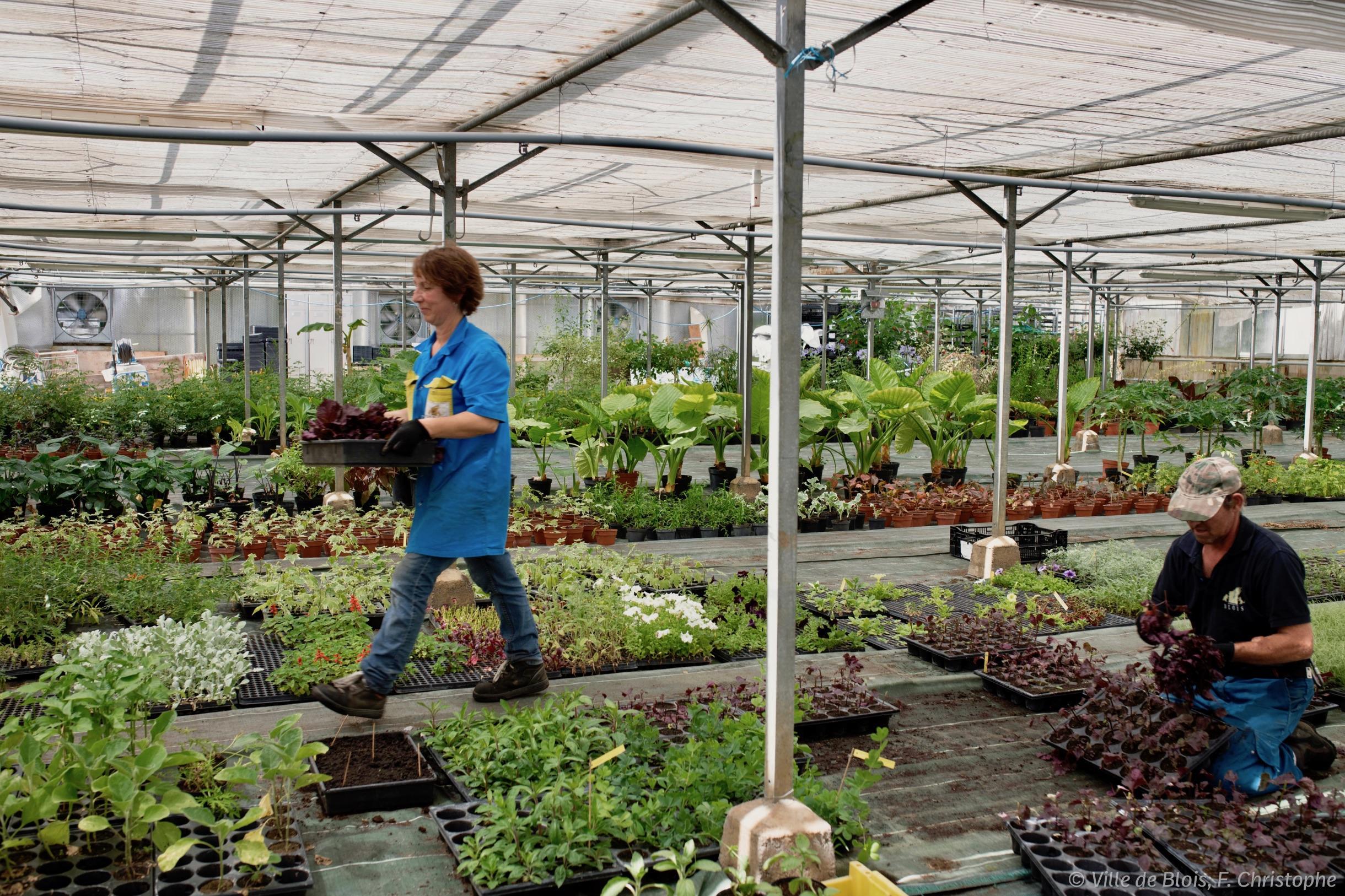 Deux personnes du service Parcs, Jardins et Espaces naturels de la Ville jardinent dans les serres municipales.